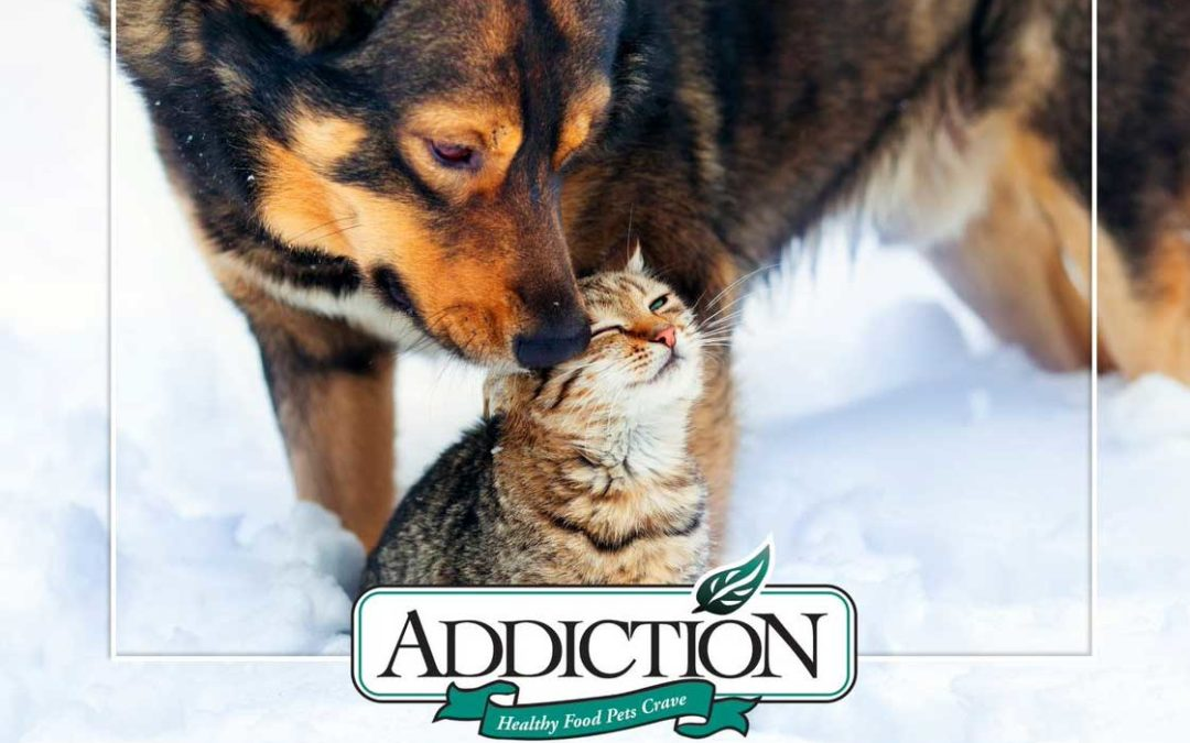 Welcoming the New Year with Better Nutrition that Takes Your Pets Further